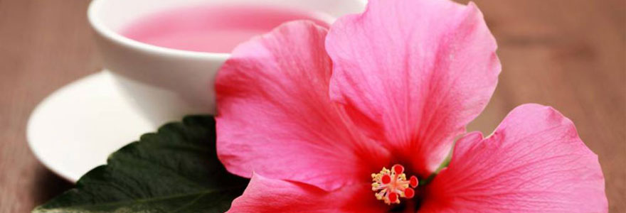fleur d'hibiscus  phytothérapie